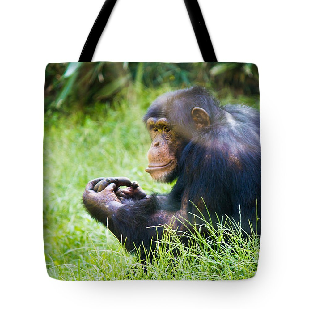 Color Tote Bag featuring the photograph Chimpanzee Looking by Jonny D