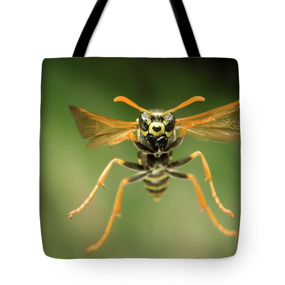 Chinese Paper Wasp Tote Bag featuring the photograph Chinese Paper Wasp by Michael Durham