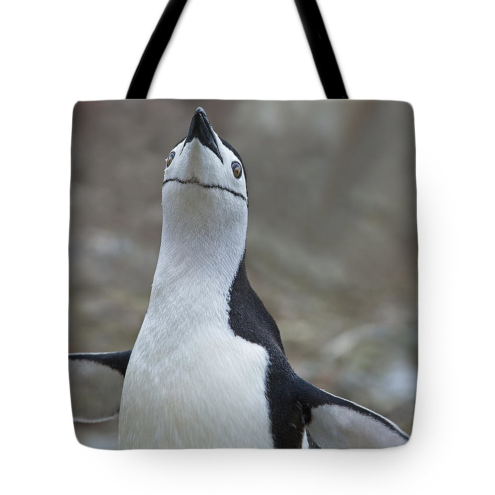 Festblues Tote Bag featuring the photograph Chinstrap Madness... by Nina Stavlund