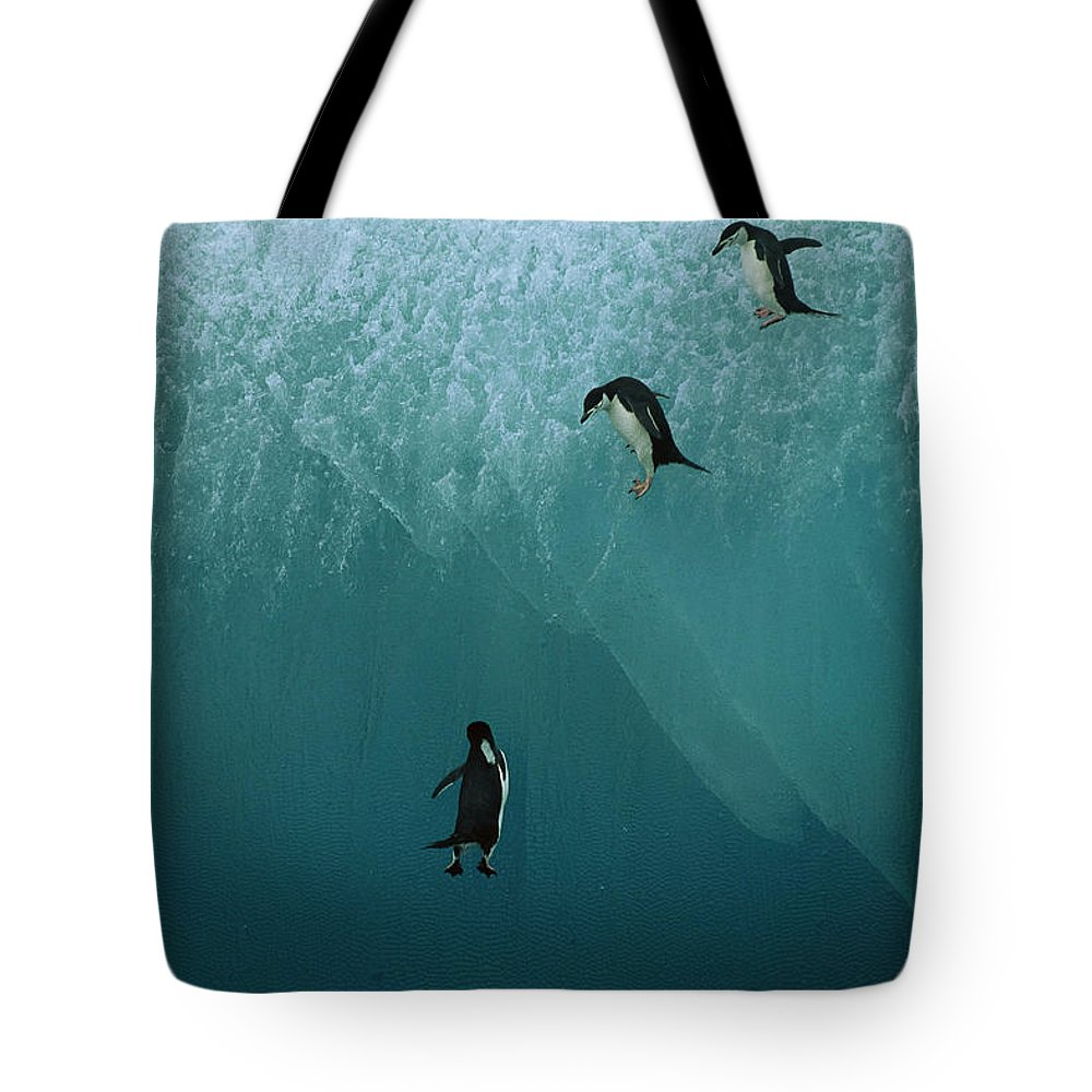Ai Tote Bag featuring the photograph Chinstrap Penguins Leaping by Jean-Paul Ferrero
