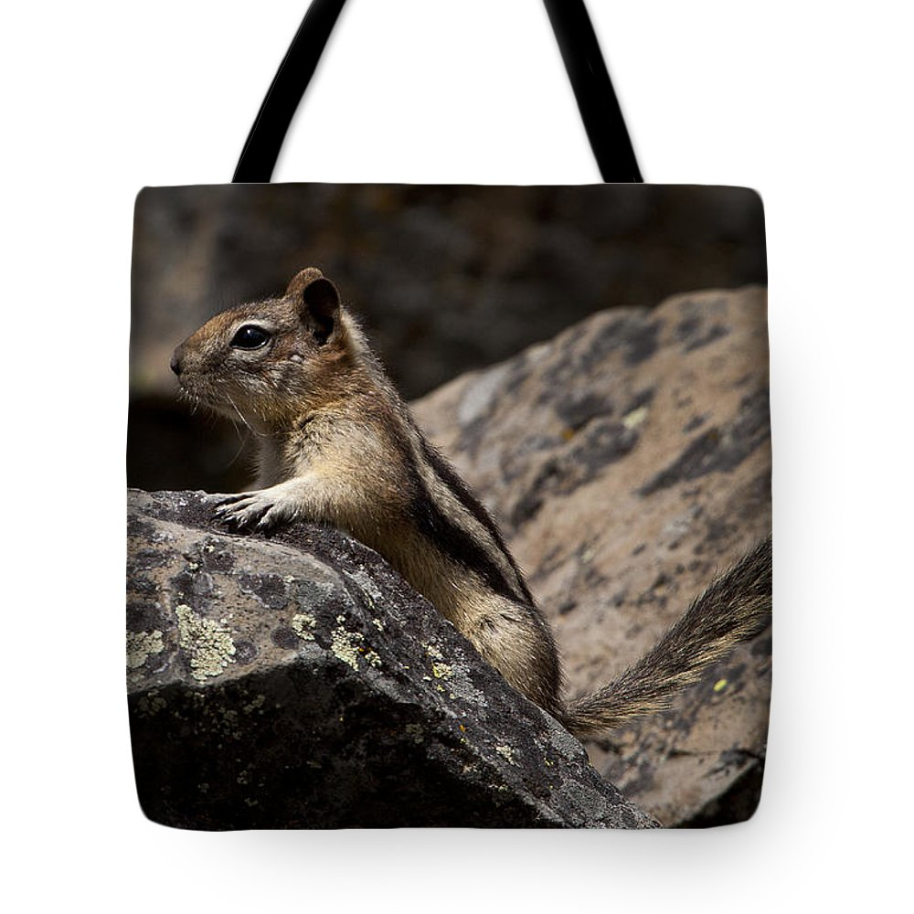 Tamias Striatus Tote Bag featuring the photograph Chipmunk  #8276 by J L Woody Wooden