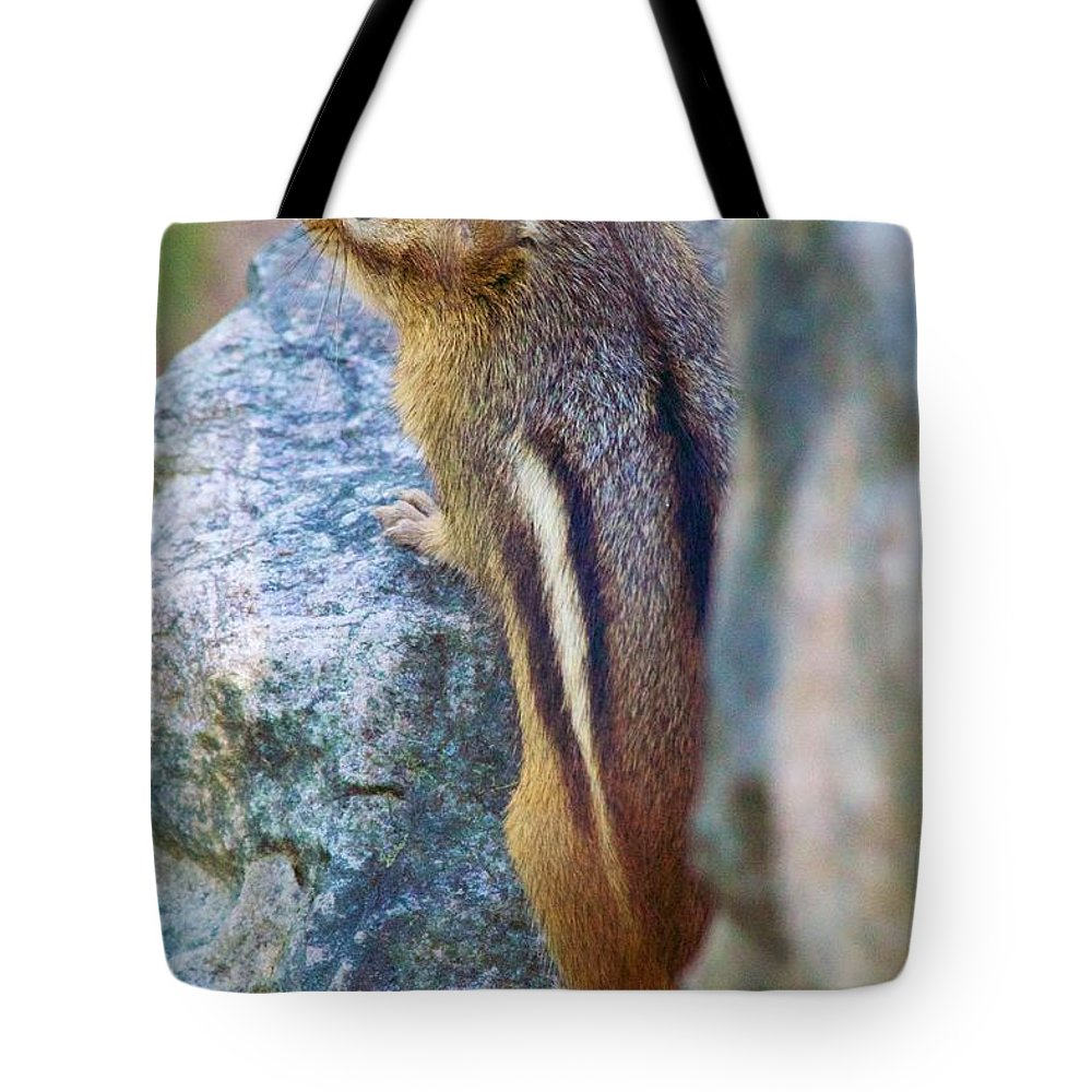 Chipmunk Tote Bag featuring the photograph Chipmunk by Allan Morrison