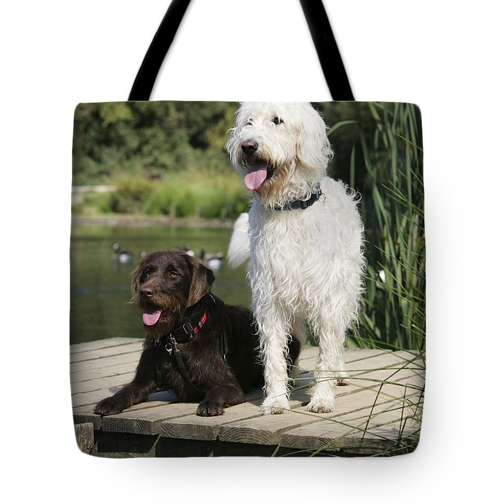 Labradoodle Tote Bag featuring the photograph Chocolate And Cream Labradoodles by John Daniels