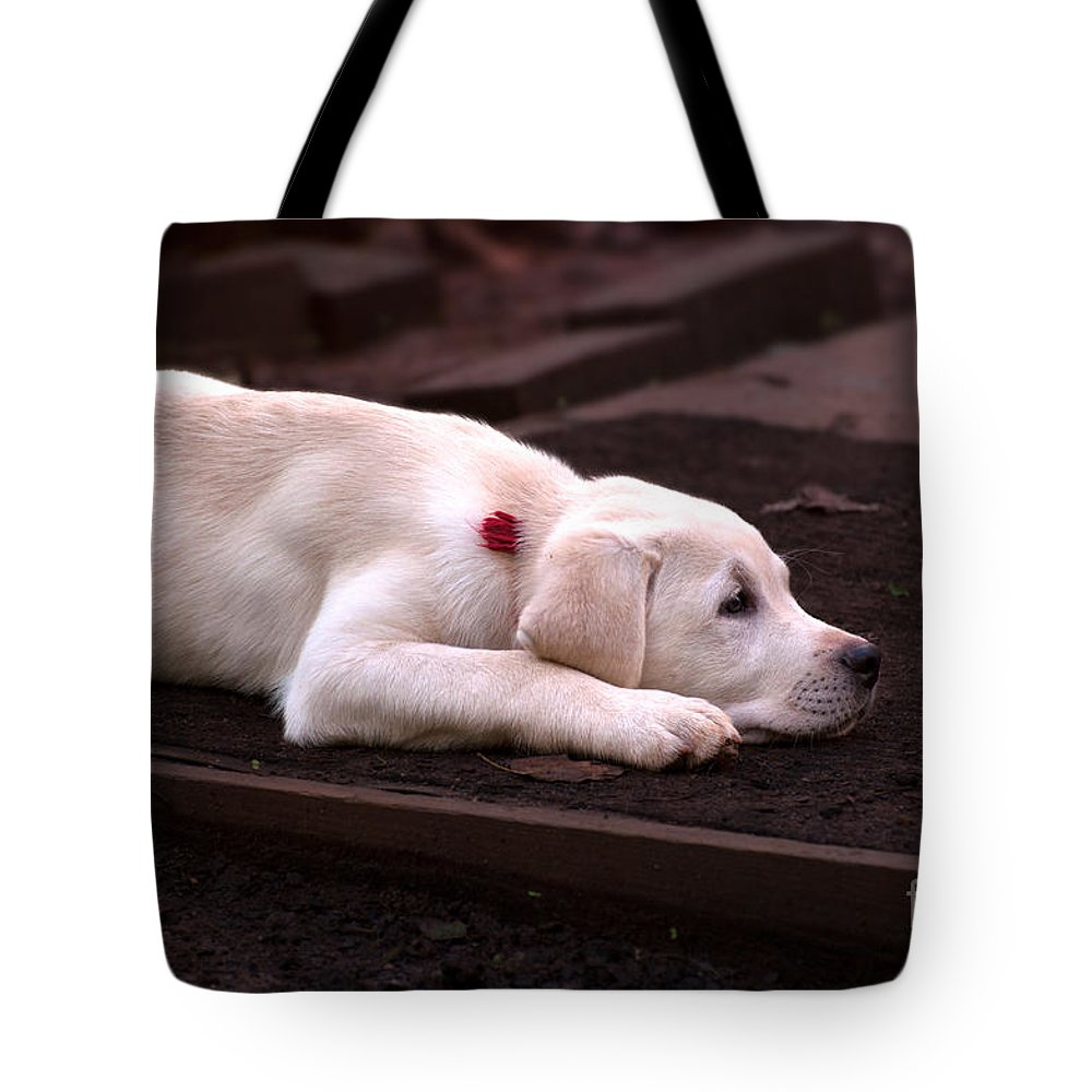 Yellow Tote Bag featuring the photograph Chocolate Dreams by Photos By Cassandra