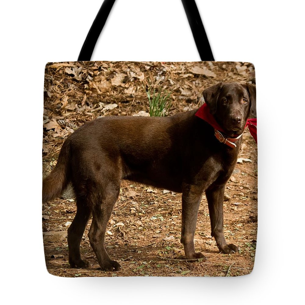Cocoa Tote Bag featuring the photograph Chocolate Lab by Robert L Jackson