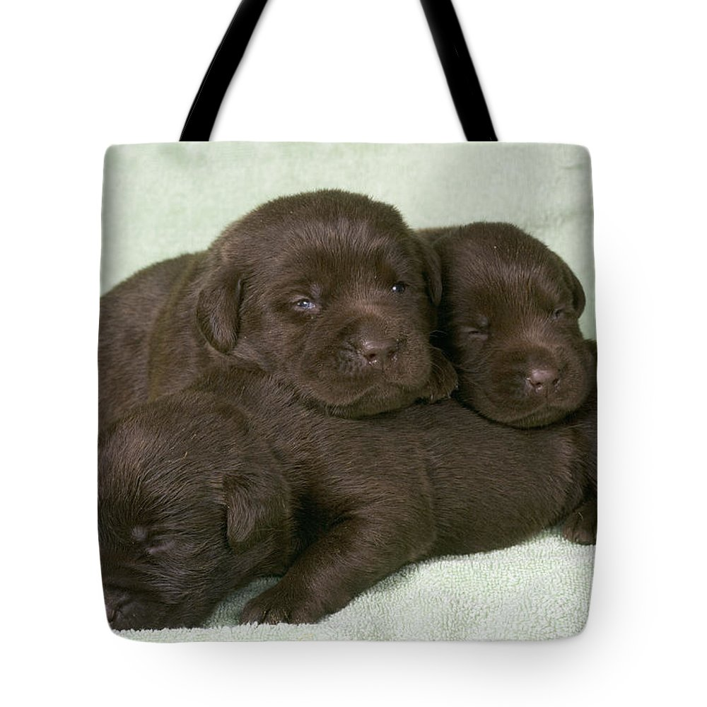 Labrador Retriever Tote Bag featuring the photograph Chocolate Labrador Puppies by Jean-Michel Labat