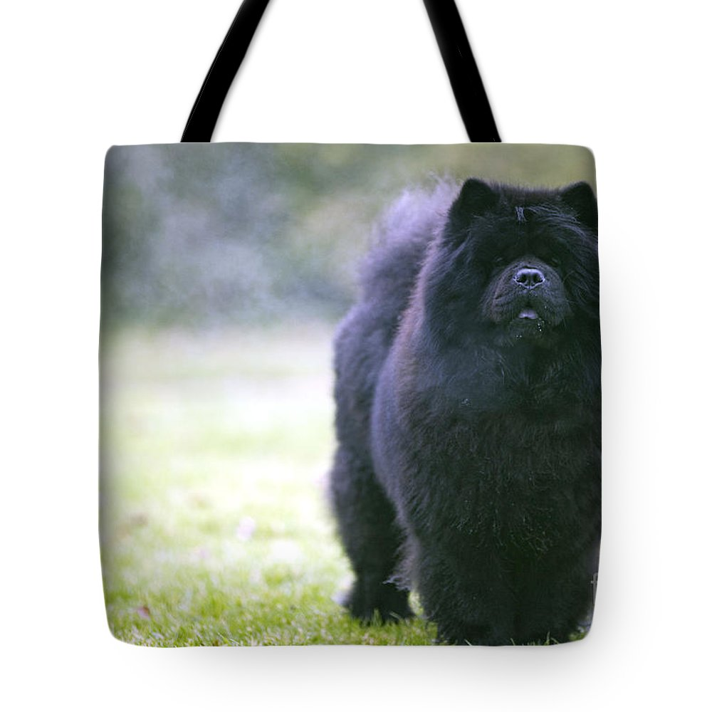 Chow Tote Bag featuring the photograph Chow Chow Dog by Jean-Michel Labat