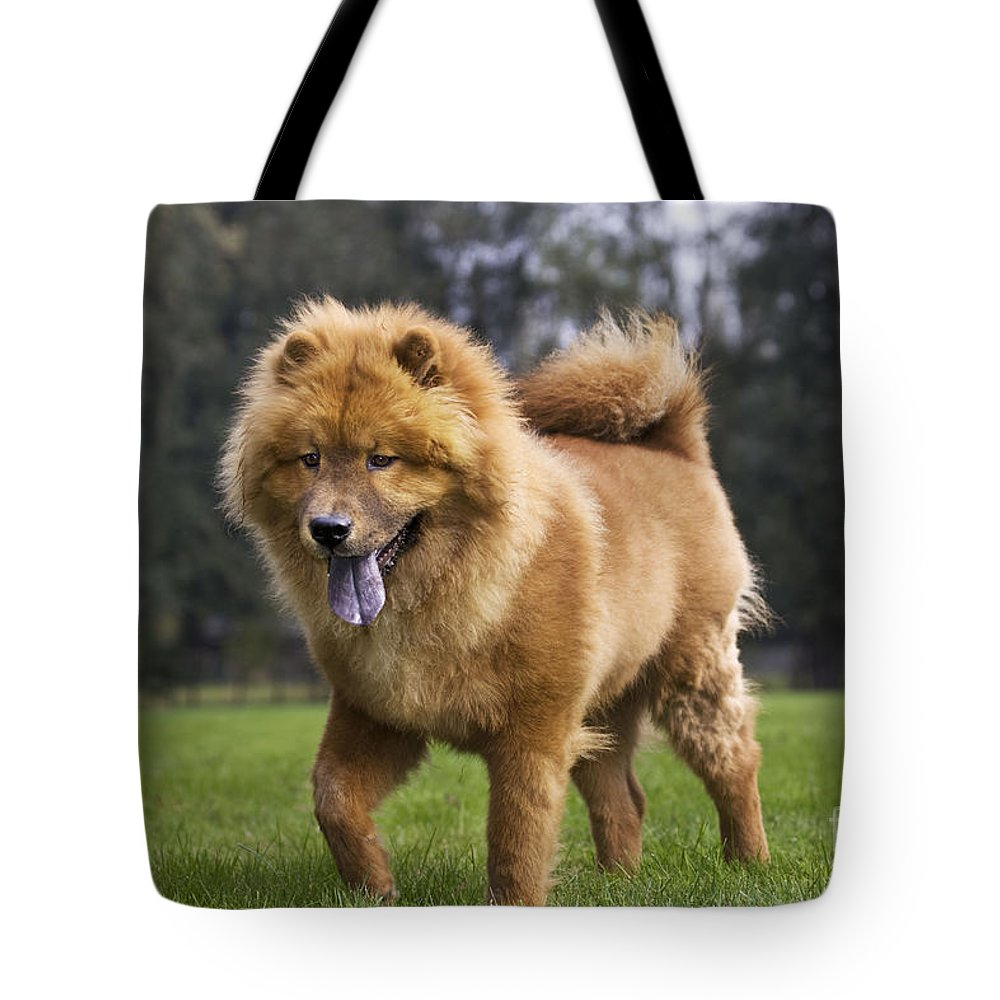 Chow Tote Bag featuring the photograph Chow Chow Dog by Johan De Meester
