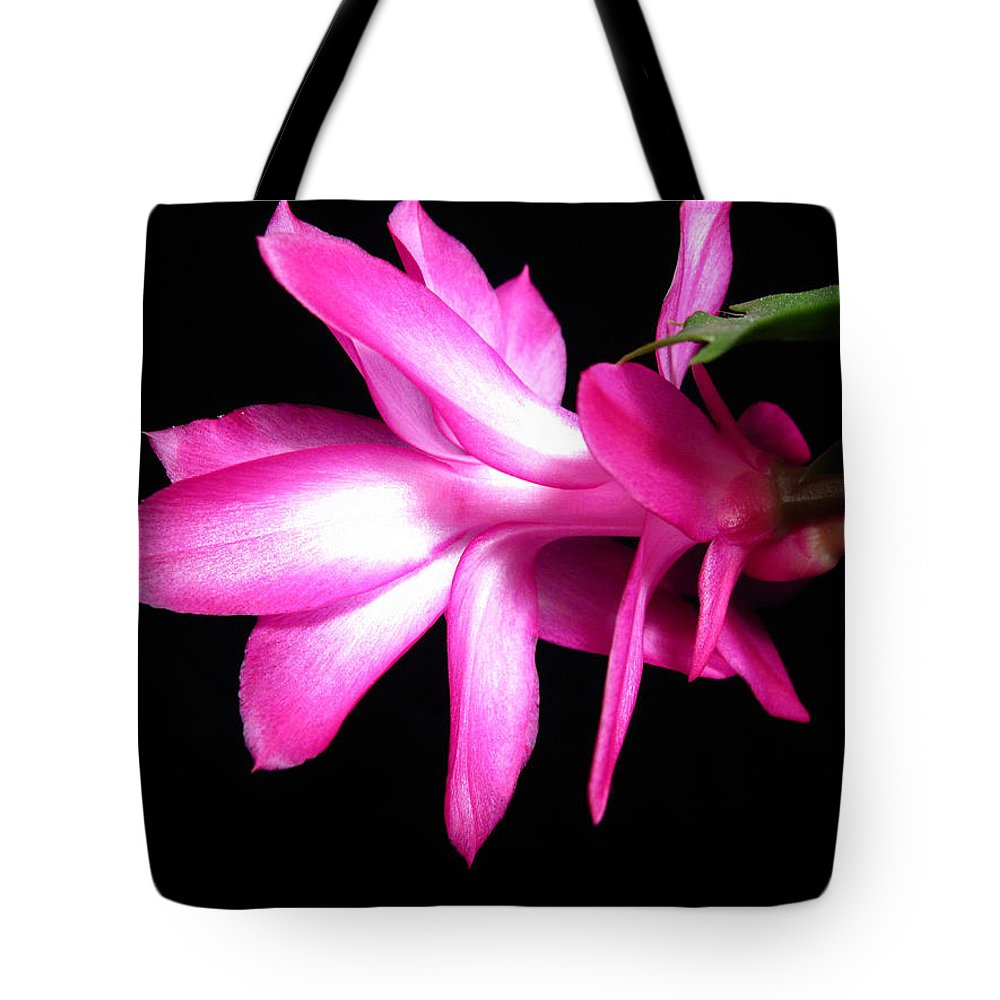 Christmas Cactus Tote Bag featuring the photograph Christmas Cactus 11 by Mary Bedy