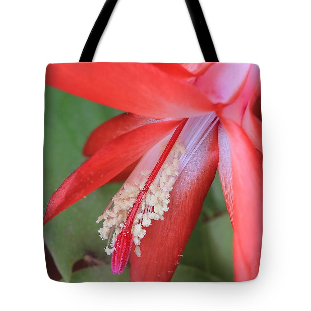 Christmas Cactus Tote Bag featuring the photograph Christmas Cactus 3 by Carol Groenen