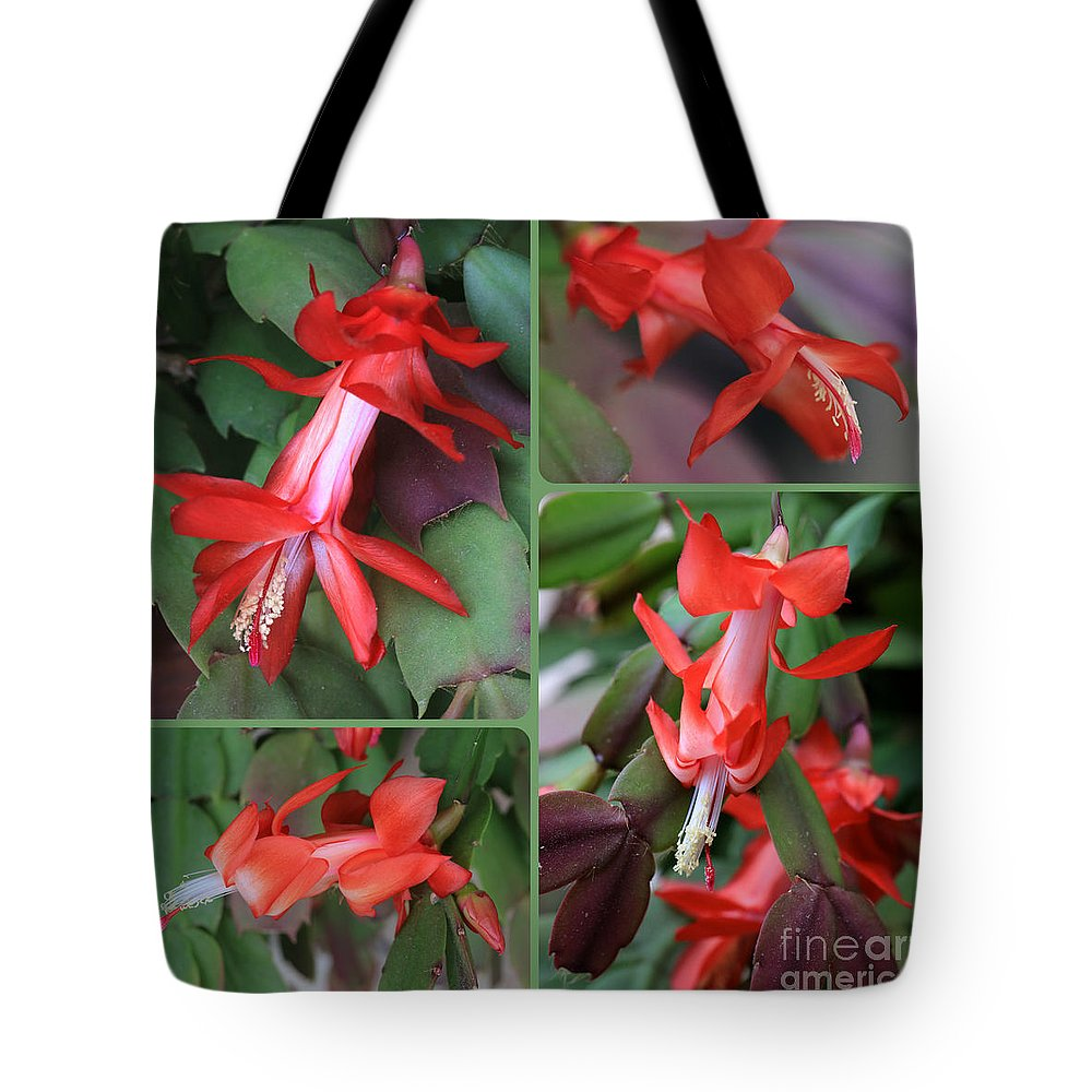Christmas Cactus Tote Bag featuring the photograph Christmas Cactus Collage by Carol Groenen