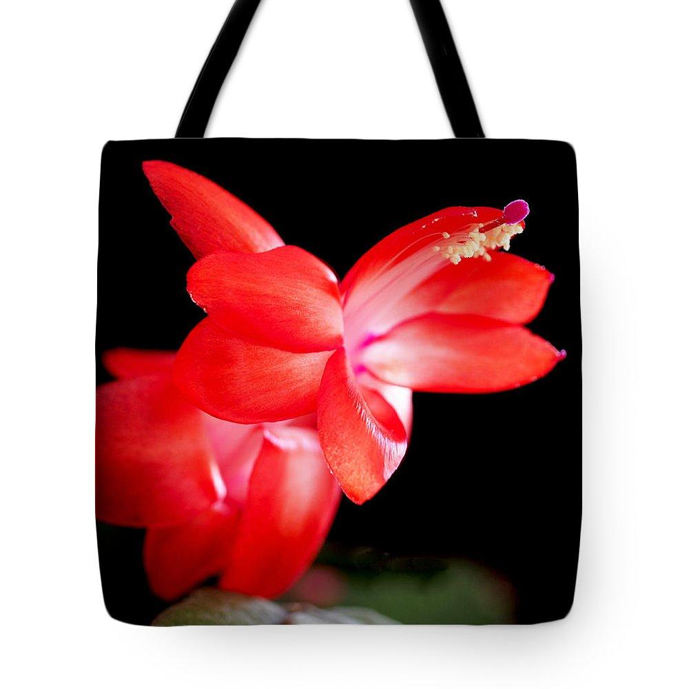 Designs Similar to Christmas Cactus Flower