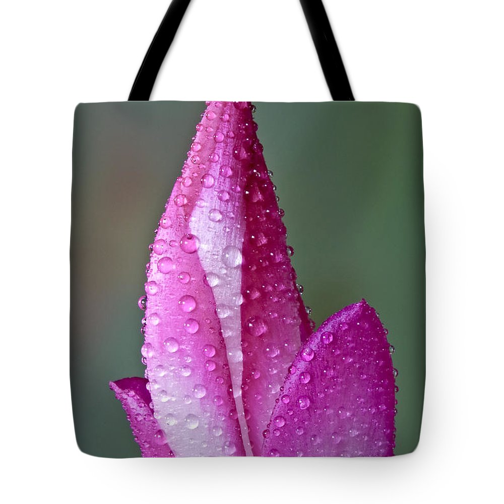 Christmas Tote Bag featuring the photograph Christmas Cactus by Susan Candelario