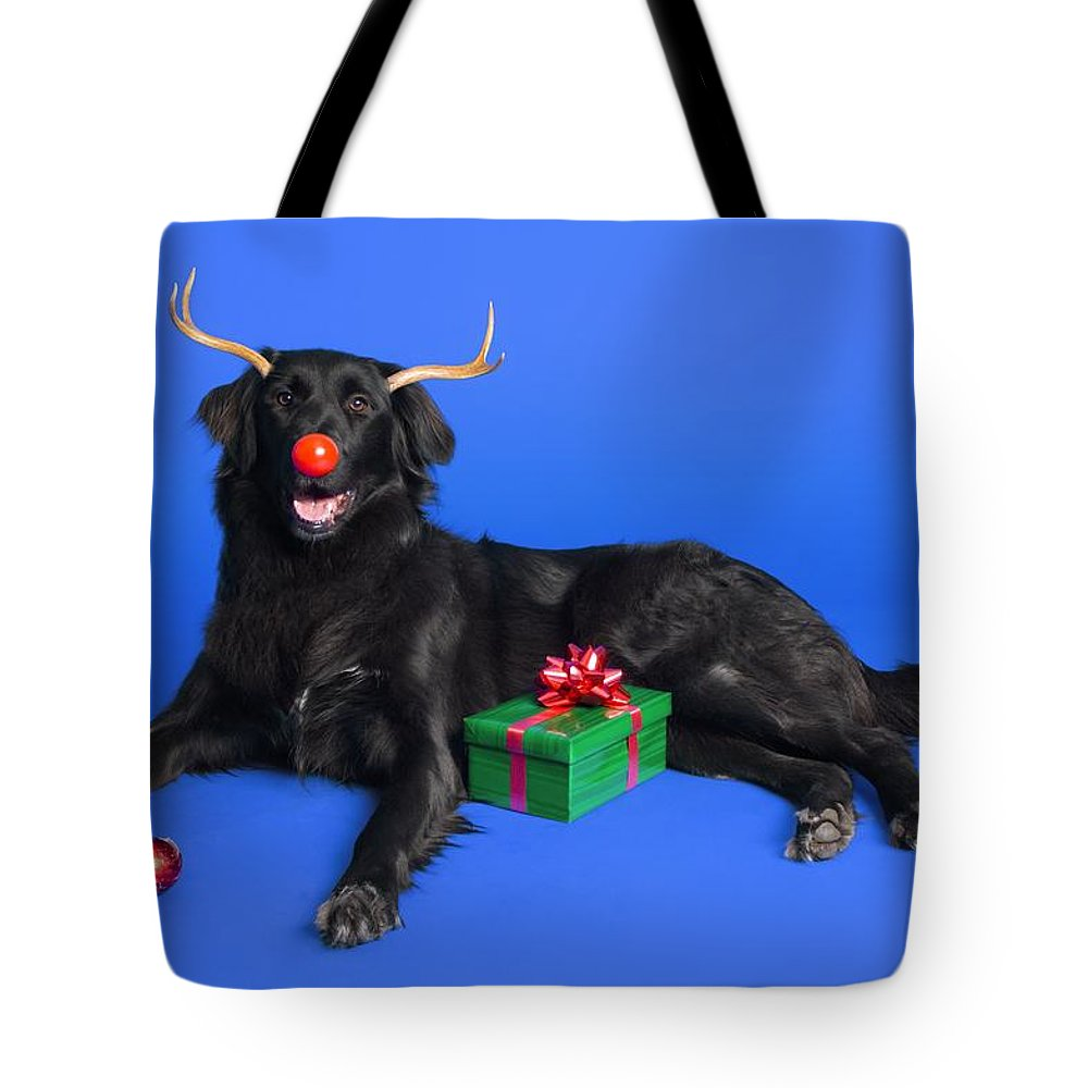 Animal Tote Bag featuring the photograph Christmas Dog by Corey Hochachka