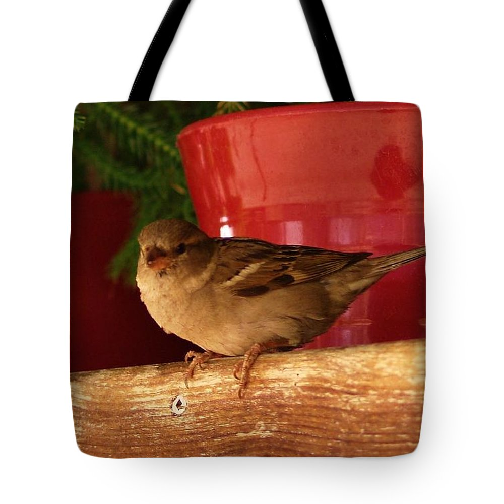 Nature Tote Bag featuring the photograph Christmas Finch by Dale Cash