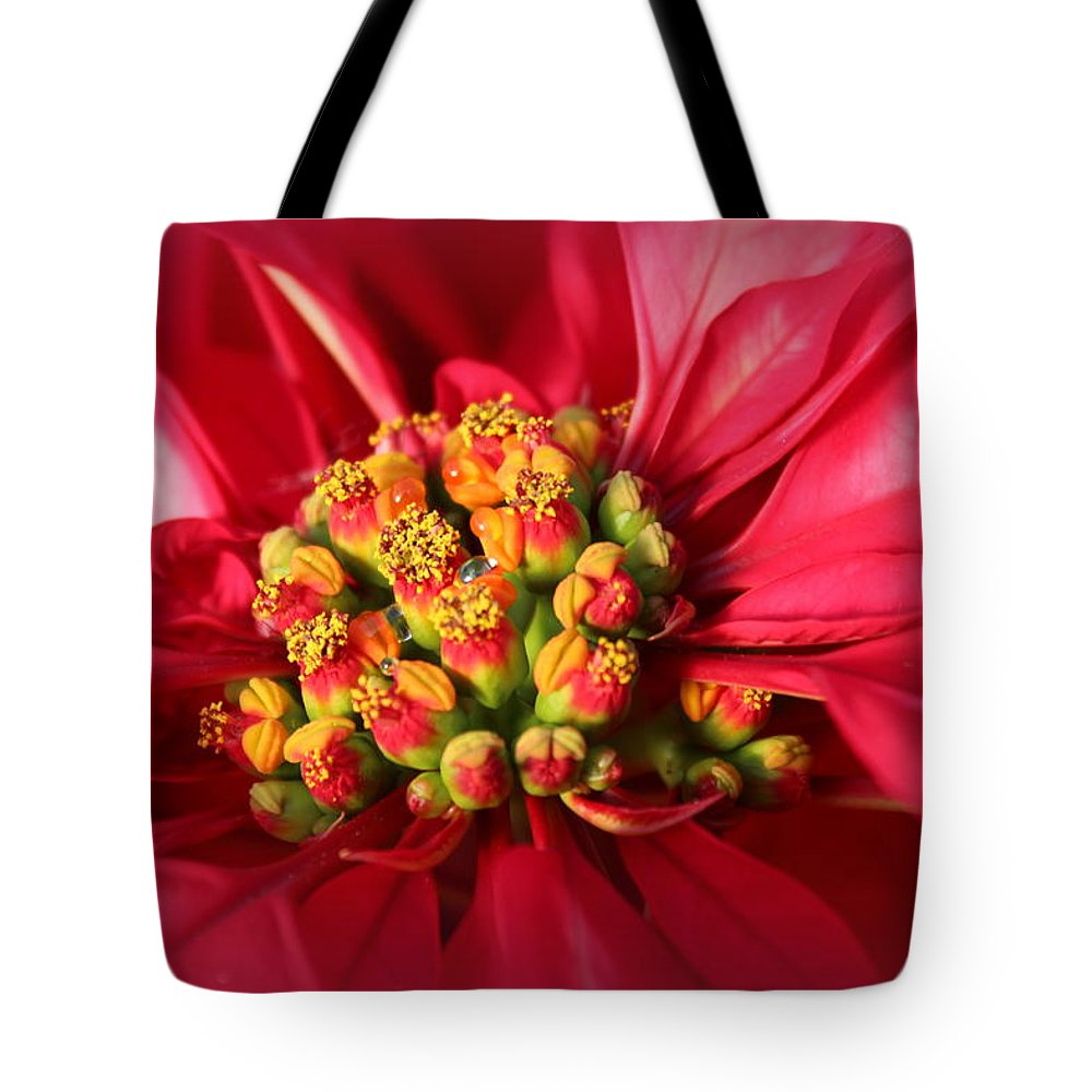 Poinsettia Tote Bag featuring the photograph Christmas Flower by Lynn Sprowl