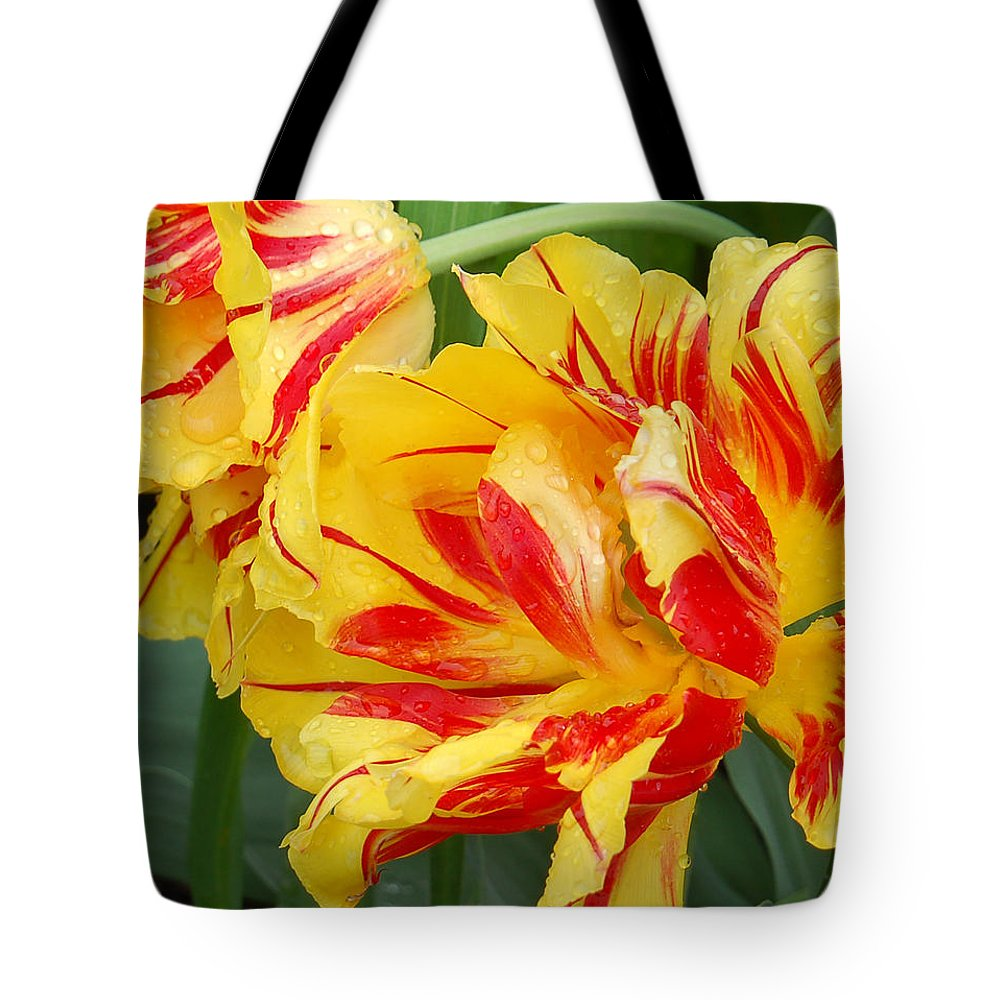 Red And Yellow Tulip Tote Bag featuring the photograph Cinco De Mayo by Suzanne Gaff