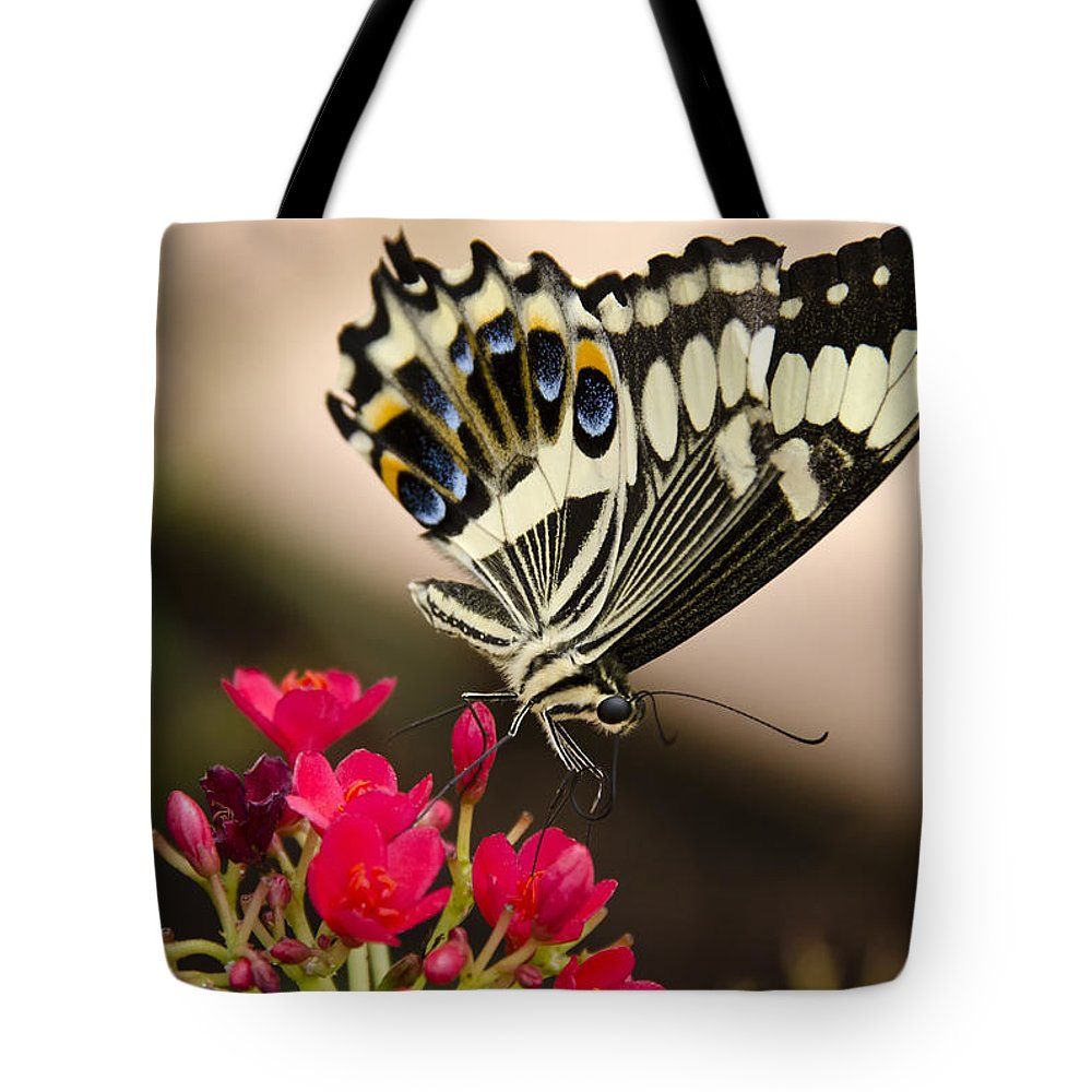 Black And White Butterfly Tote Bag featuring the photograph Citrus Swallowtail by Saija Lehtonen