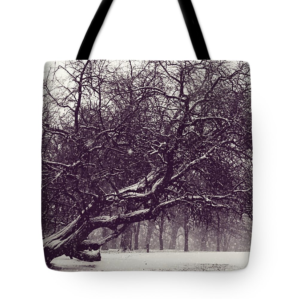 Tree Tote Bag featuring the photograph City Park Icon by Pam Holdsworth