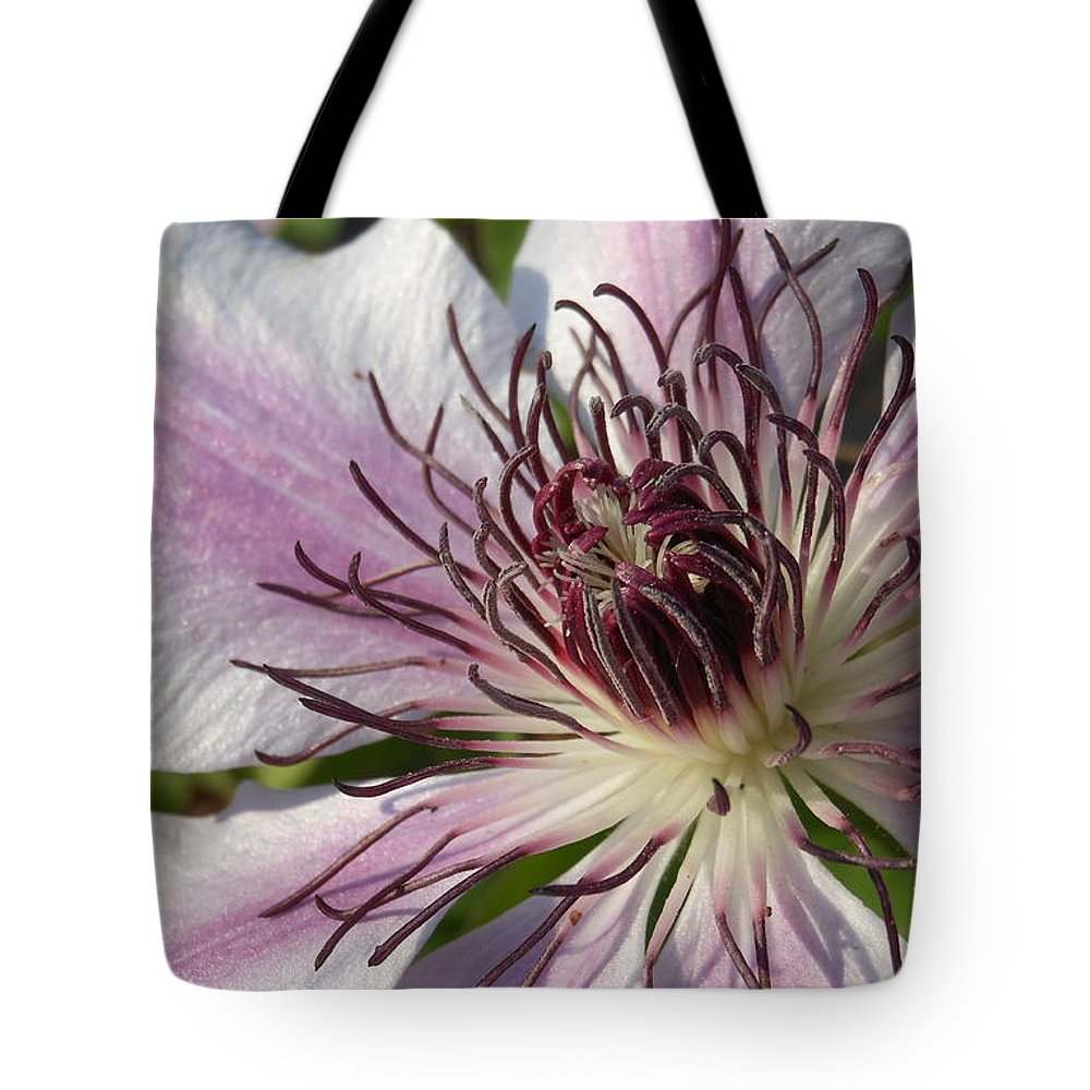 Spring Tote Bag featuring the photograph Clematis by Charlotte Stevenson