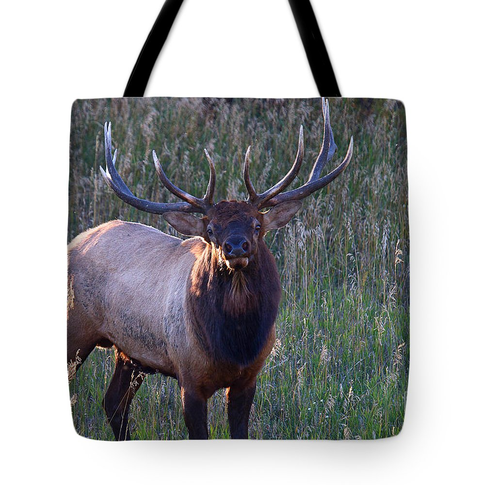 Elk Tote Bag featuring the photograph A Subtle Warning by Jim Garrison