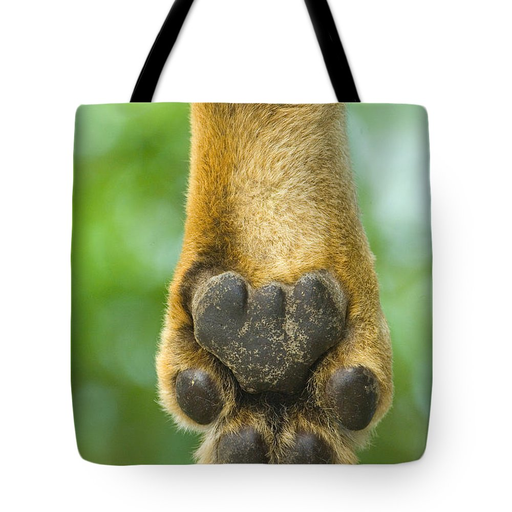 Photography Tote Bag featuring the photograph Close-up Of A Lions Paw, Lake Manyara by Panoramic Images