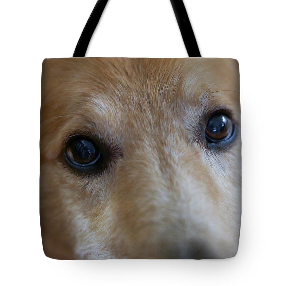 Day Tote Bag featuring the photograph Close Up Of A Pet Dogs Eyes by Al Petteway & Amy White