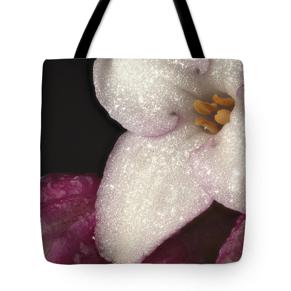 Daphne Odora Tote Bag featuring the photograph Close Up Of Daphne Odora by Jean Noren