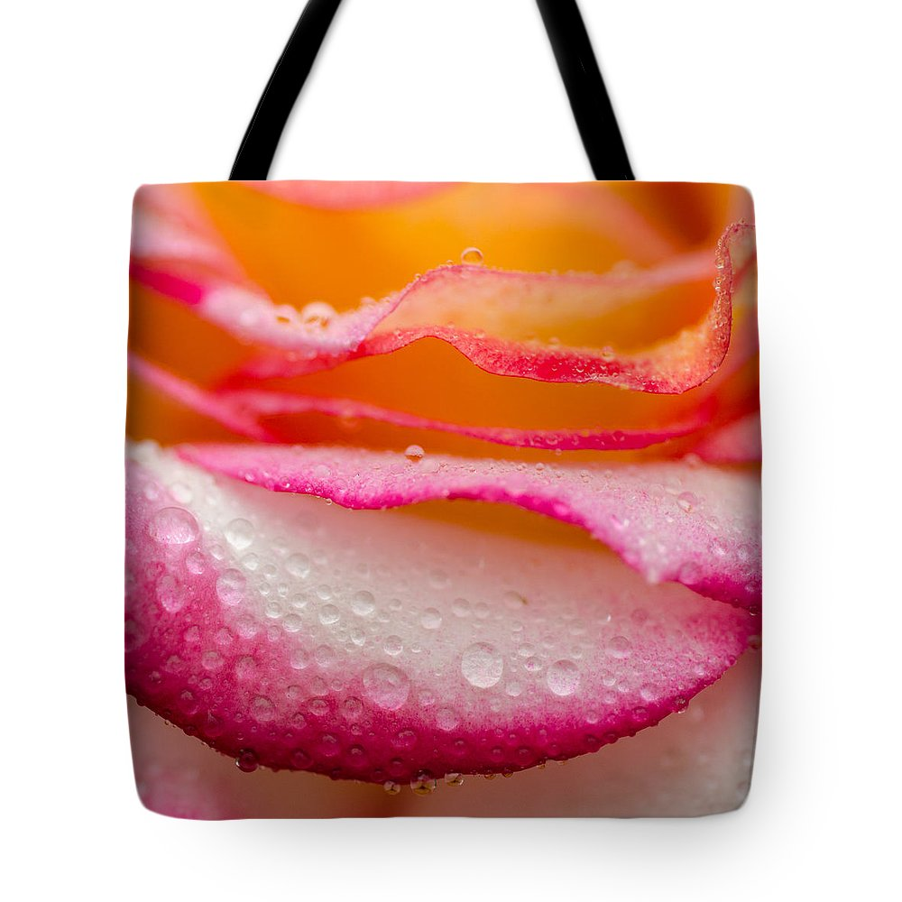 Roses Tote Bag featuring the photograph Close Up Of Pink Rose Petails Covered Dew by TouTouke A Y