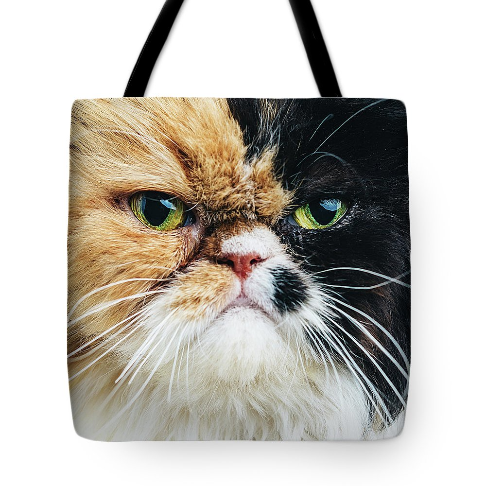 Purebred Cat Tote Bag featuring the photograph Close Up Portrait Of A Persian Cat by Sensorspot
