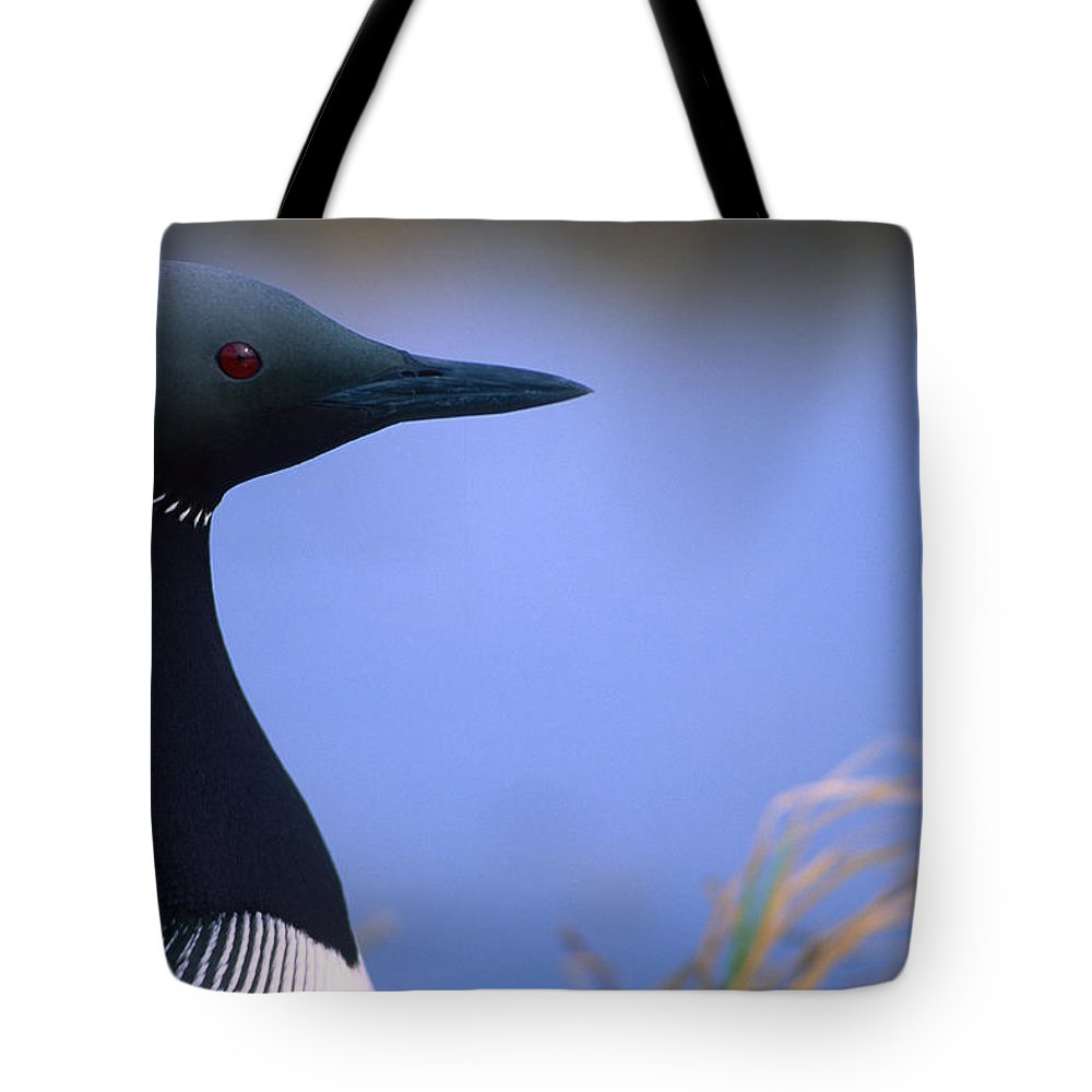 Light Tote Bag featuring the photograph Close Up Portrait Of An Arctic Loon by Peter Mather