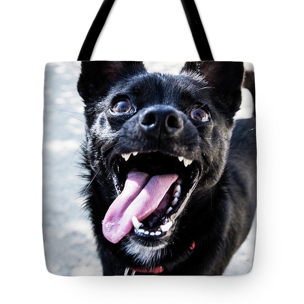 Pets Tote Bag featuring the photograph Close-up Shot Of A Little Black Dog - by Amandafoundation.org