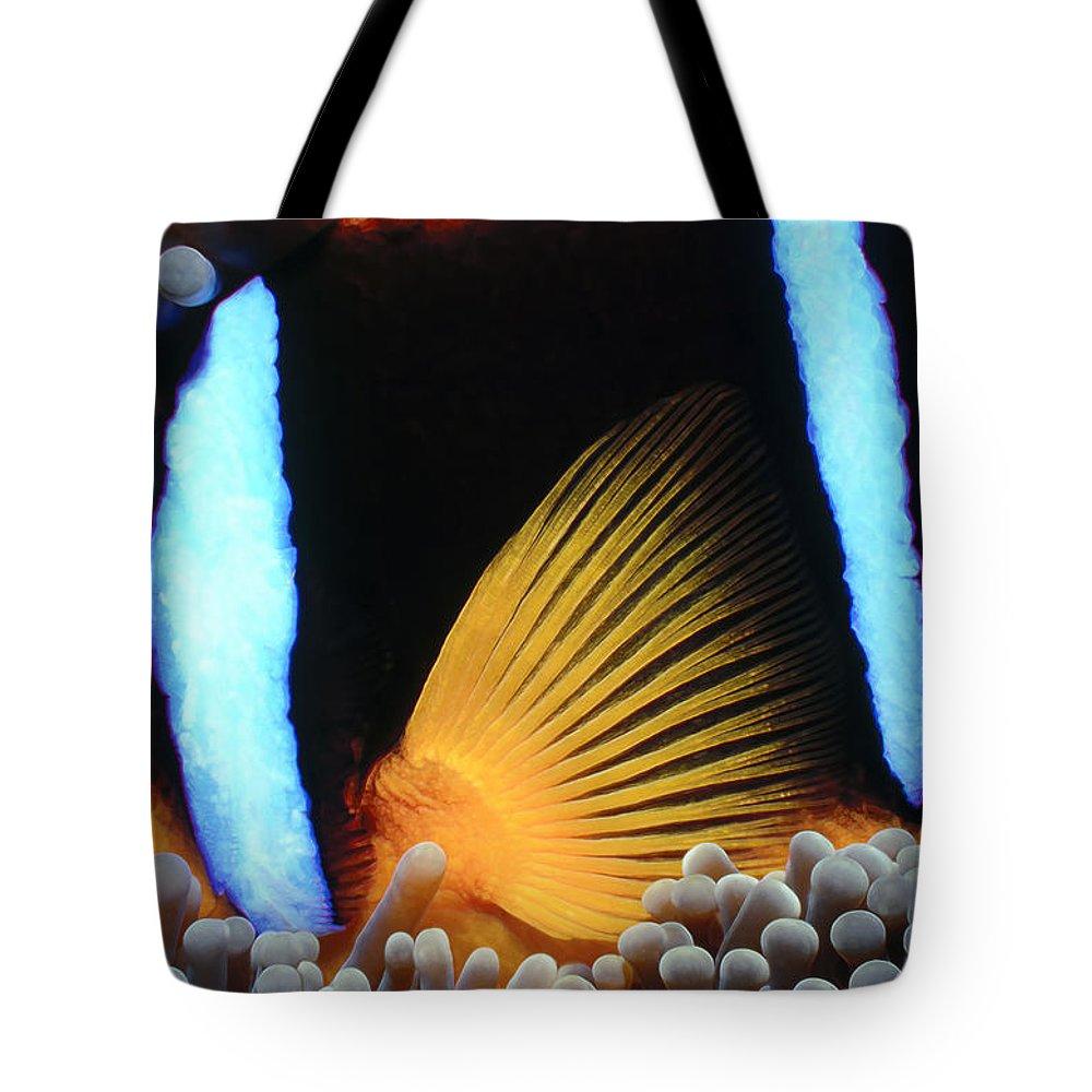Micronesia Tote Bag featuring the photograph Clownfish 1 by Dawn Eshelman