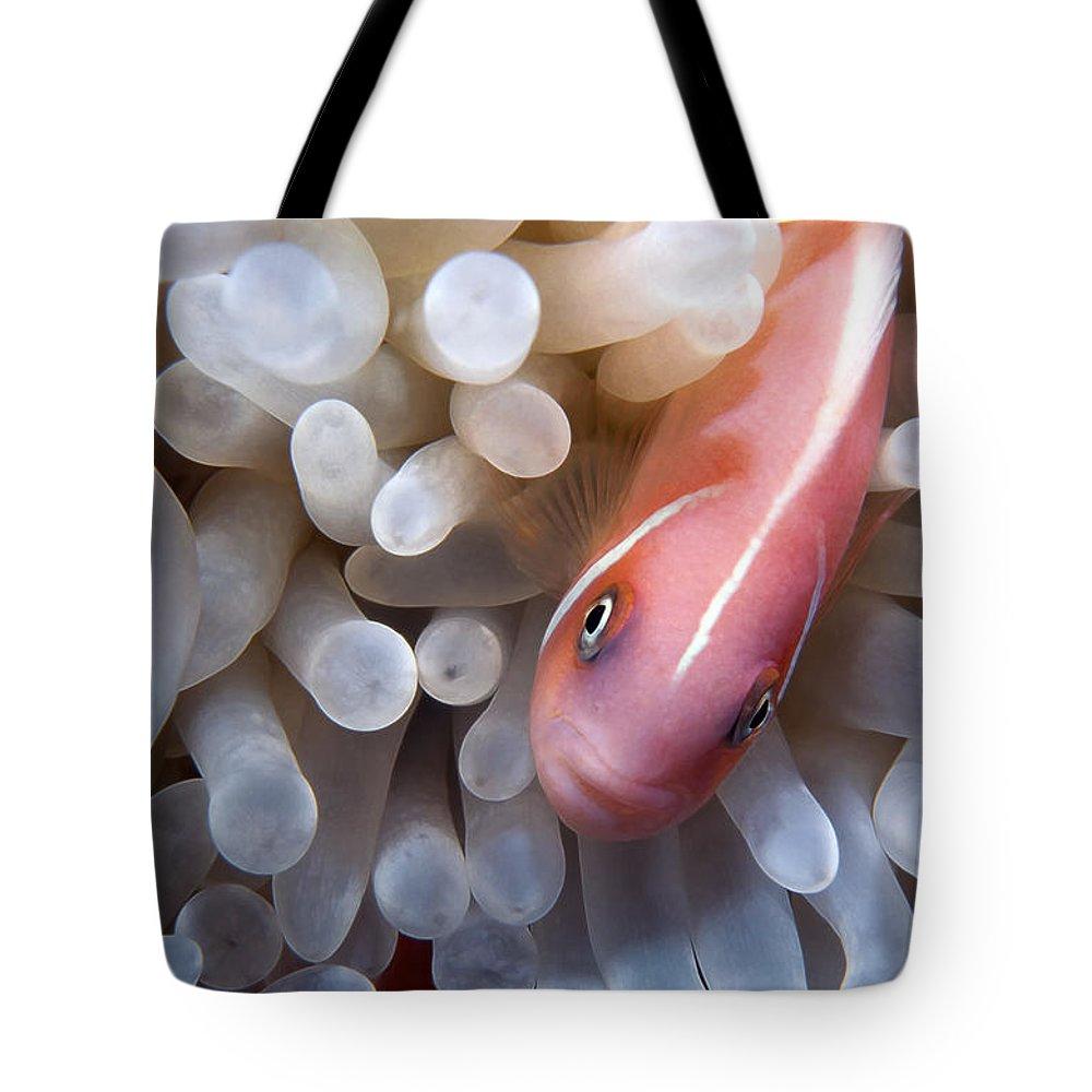 Micronesia Tote Bag featuring the photograph Clownfish 12 by Dawn Eshelman