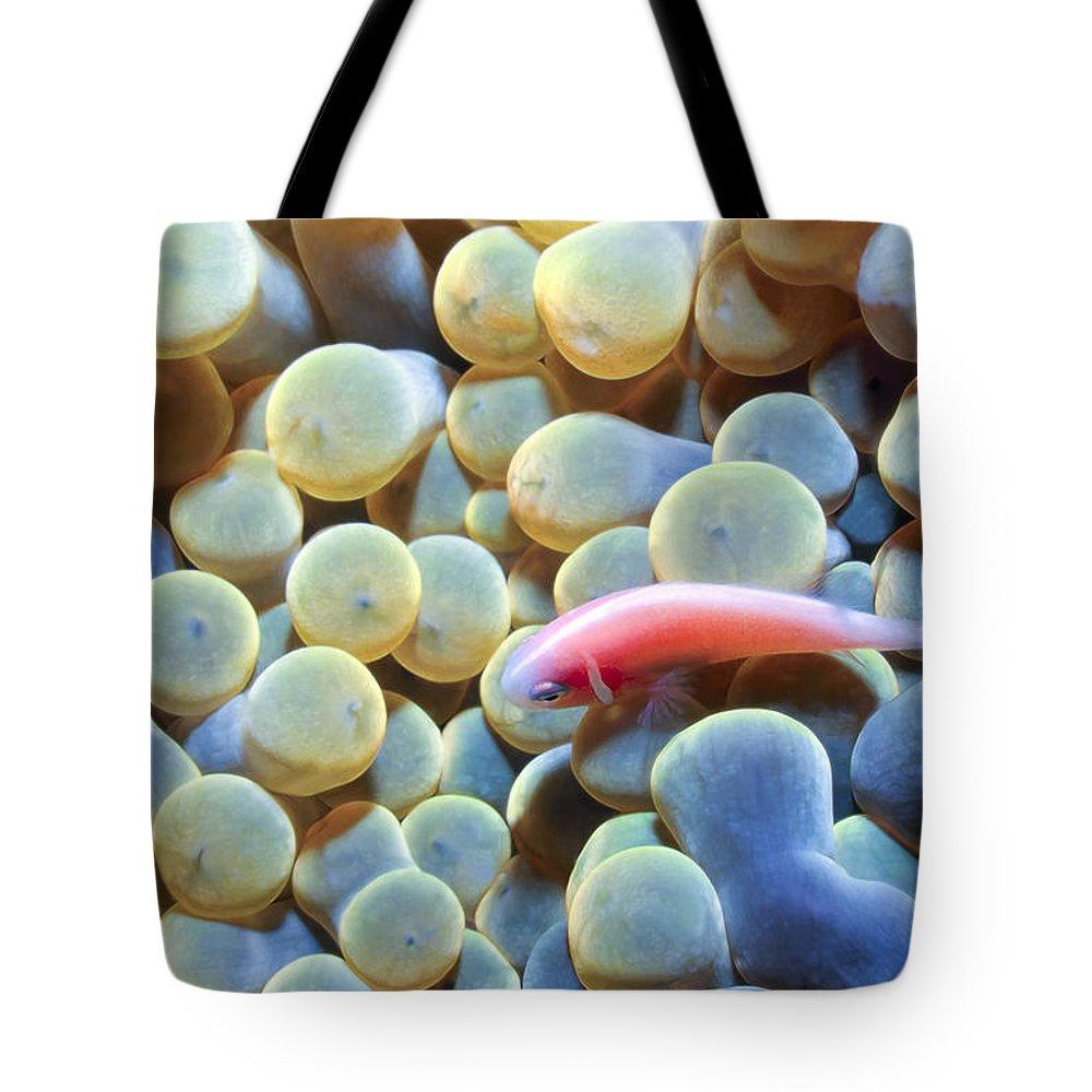 Micronesia Tote Bag featuring the photograph Clownfish 56 by Dawn Eshelman