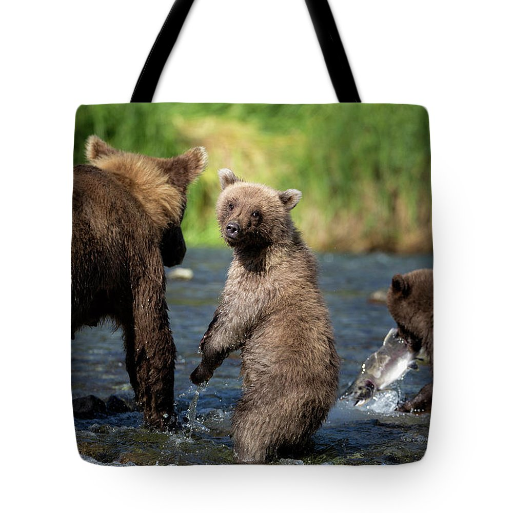 Katmai Peninsula Tote Bag featuring the photograph Coastal Brown Bear Family by Justinreznick