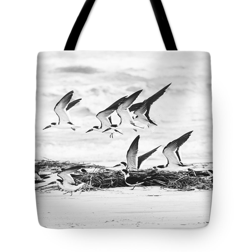 Nature Skimmer Black White Beach Water Flight Tote Bag featuring the photograph Coastal Wildlife by Jacquie Law