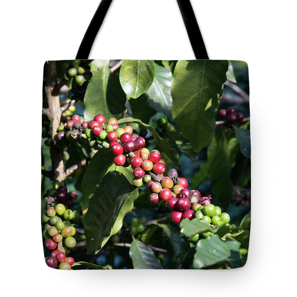 Tranquility Tote Bag featuring the photograph Coffee Farming. Northern Thailand by Eitan Simanor