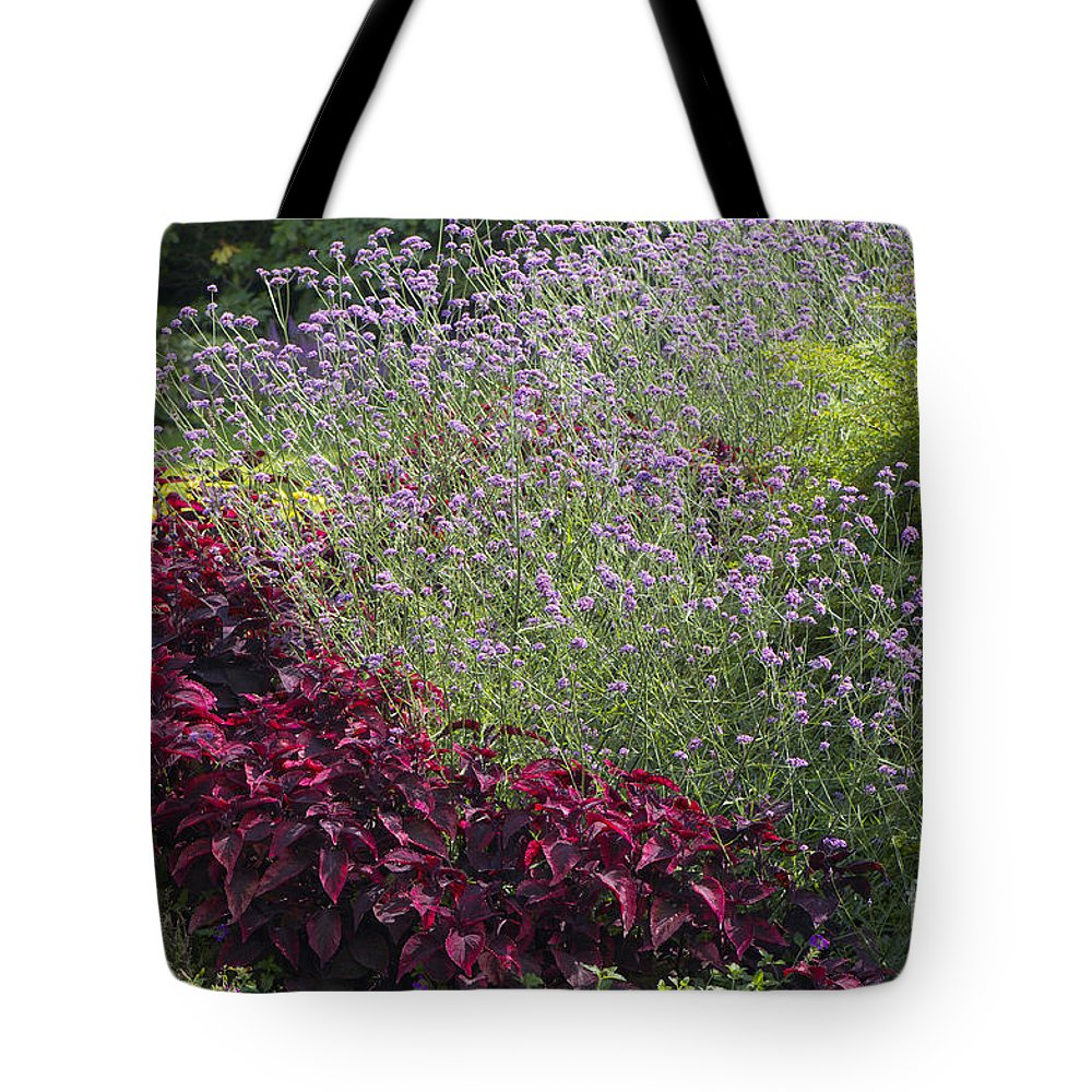 Coleus Tote Bag featuring the photograph Coleus And Lavender by Sharon Talson