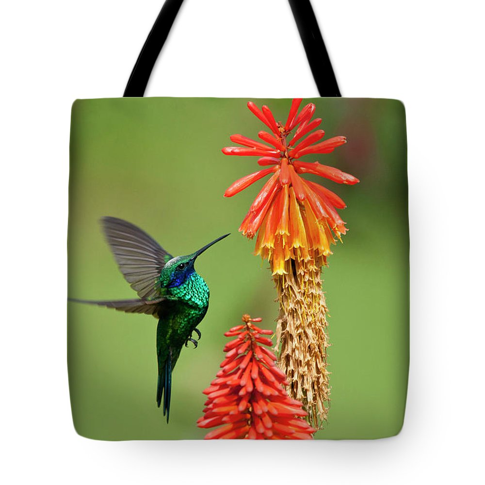 Animal Themes Tote Bag featuring the photograph Colibri Coruscans by Photo By Priscilla Burcher