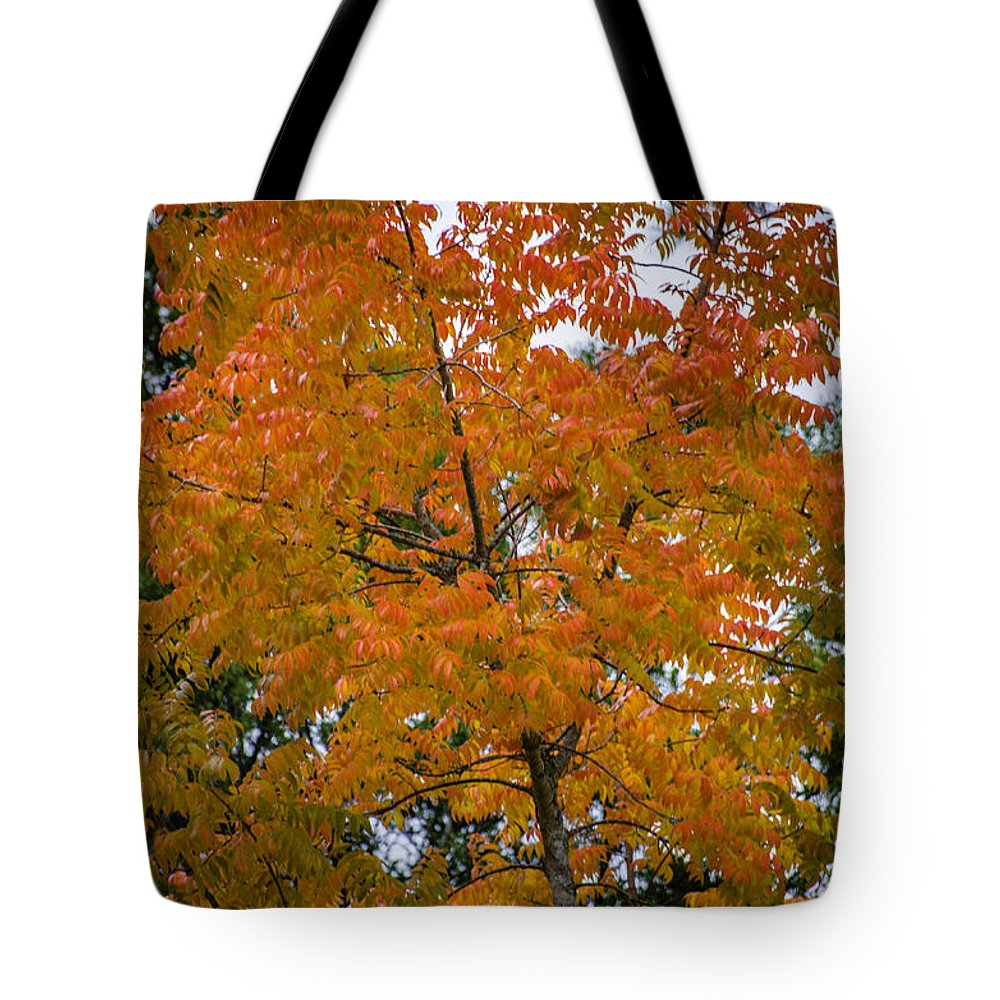 Maple Leaf Tote Bag featuring the photograph Color Of Fall by Dale Powell