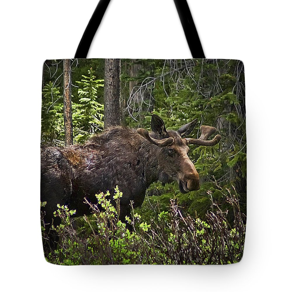 Moose Tote Bag featuring the photograph Colorado Moose by Priscilla Burgers