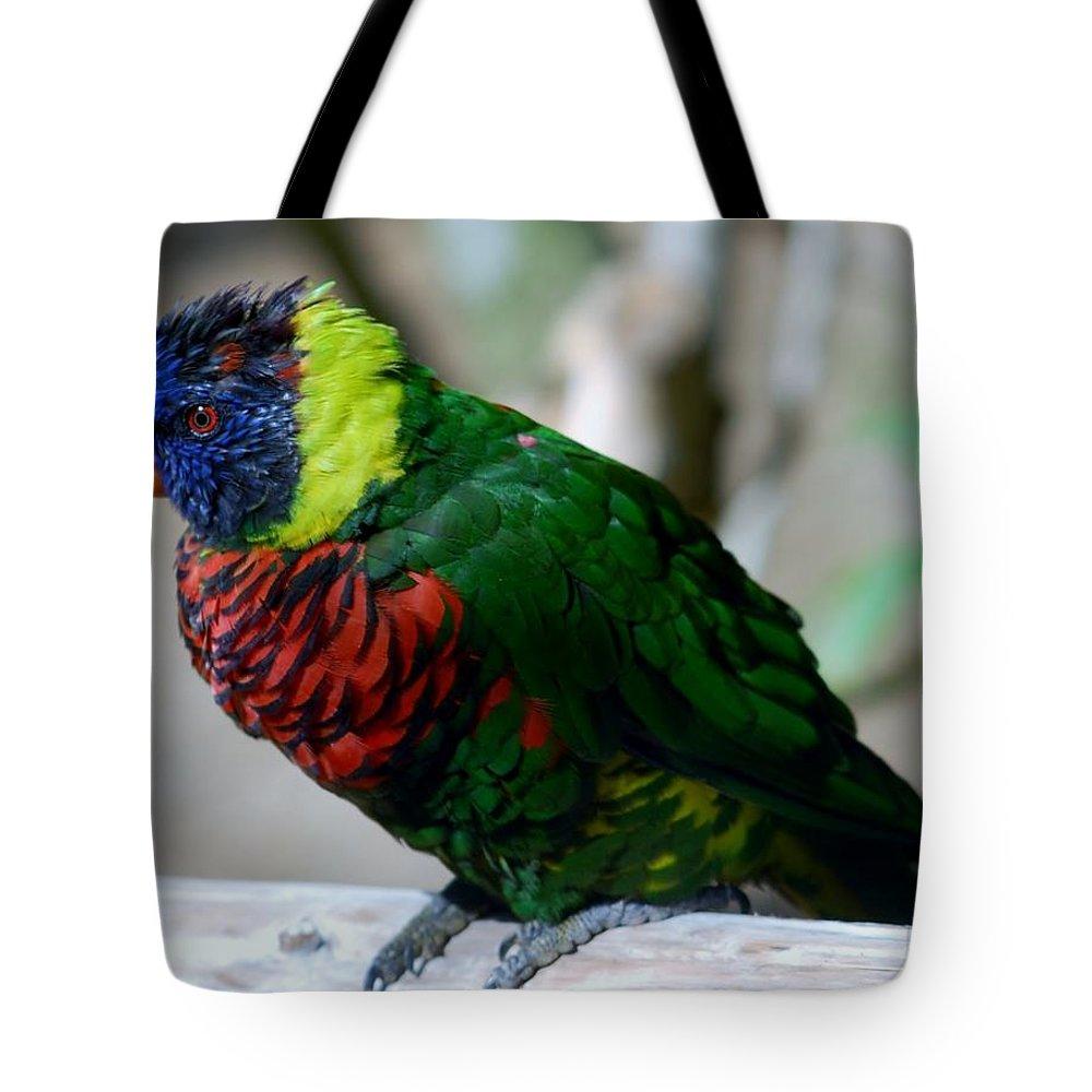 Bird Tote Bag featuring the photograph Colorful Bird by Susan Garren