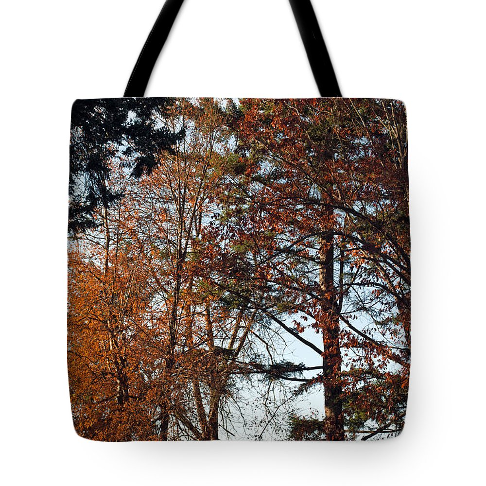 Trees Tote Bag featuring the photograph Colors Of Autumn by Tikvah's Hope