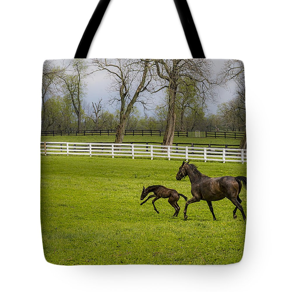 Animal Tote Bag featuring the photograph Colt by Jack R Perry