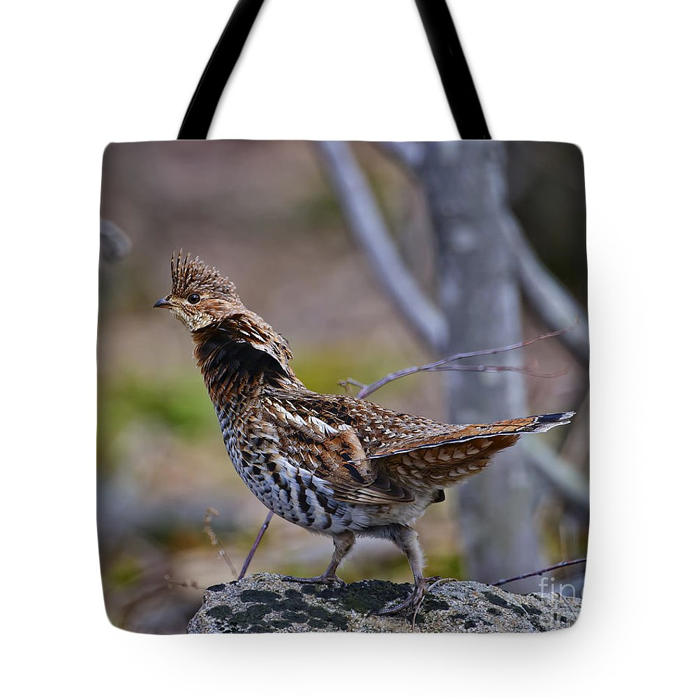 Grouse Tote Bag featuring the photograph Coltsfoot Ruffed Grouse by Timothy Flanigan