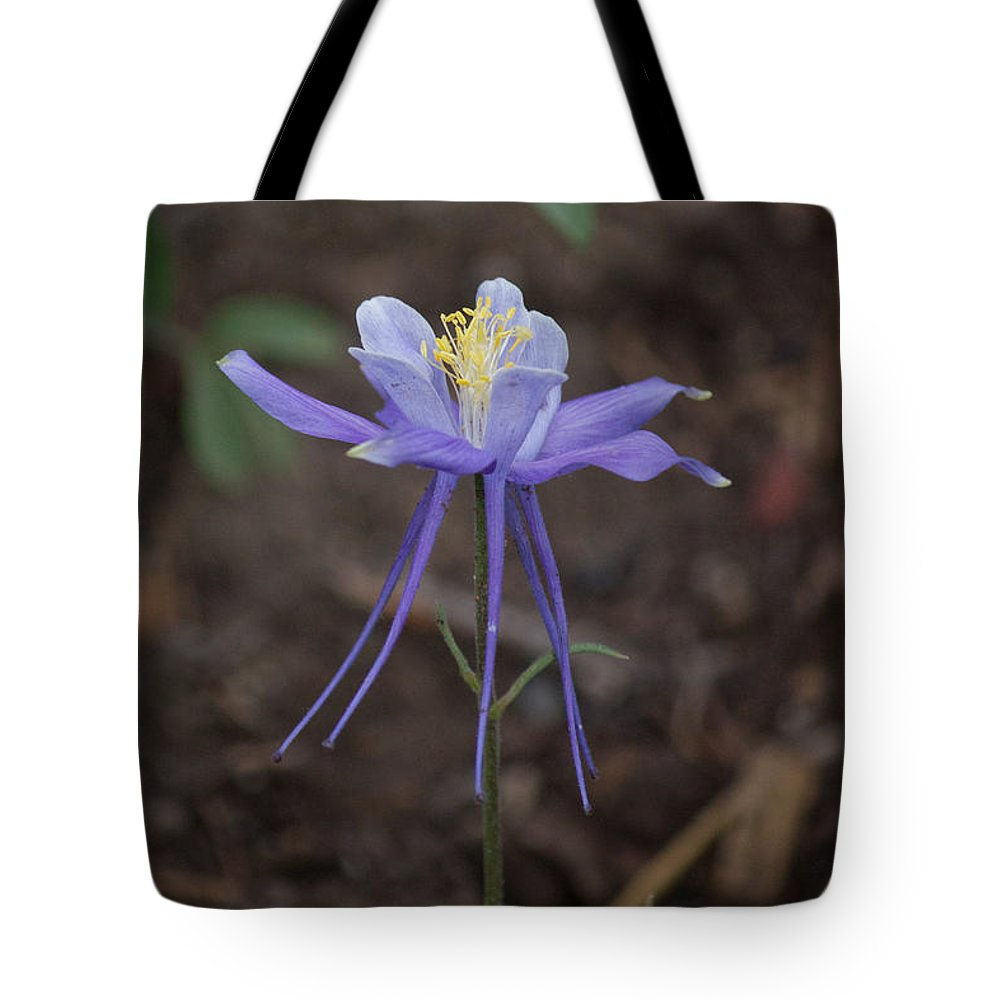 Tote Bag featuring the photograph Columbine by Dawn Morrow