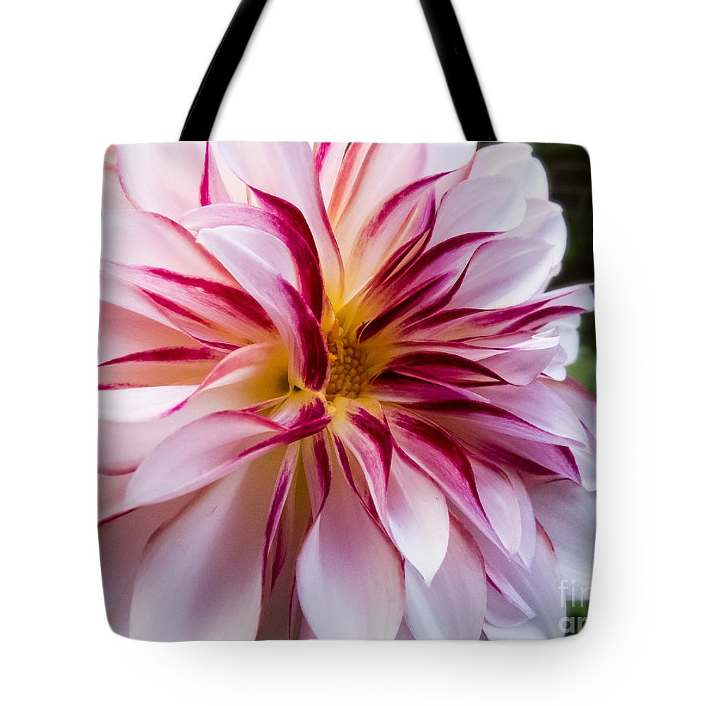 Dahlia Tote Bag featuring the photograph Comet by Jon Munson II