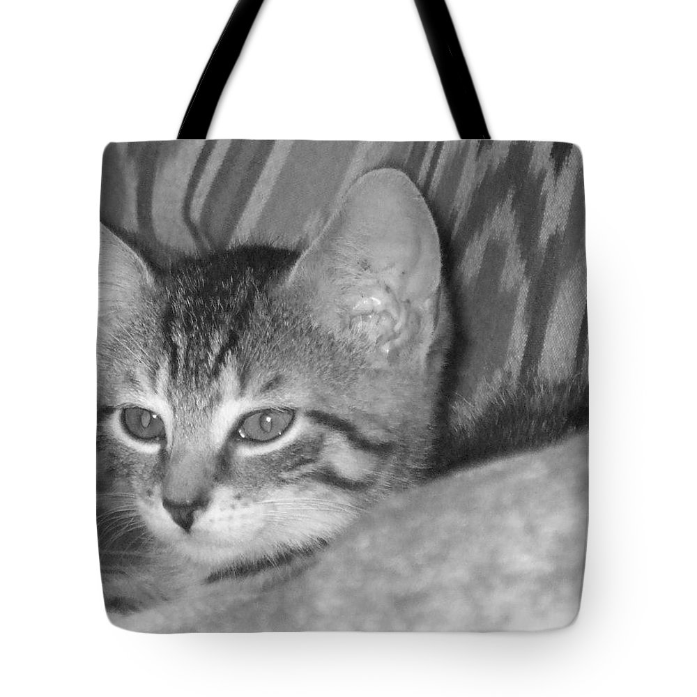 Kitten Tote Bag featuring the photograph Comfy Kitten by Pharris Art
