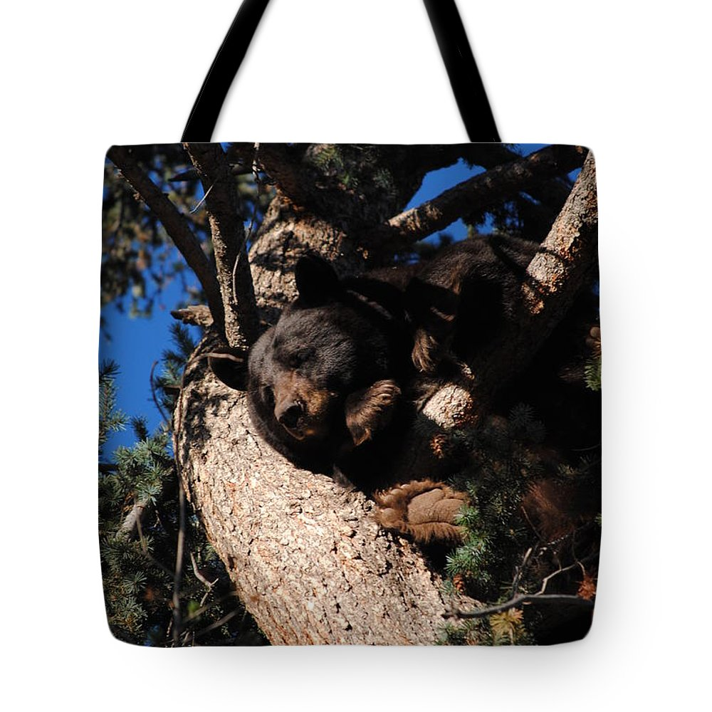 Mamma Bear; Bear; Colorado; Wild; Wilderness; Wild; Animal; Wild Animal; Bear Tote Bag featuring the photograph Comfy Mamma Bear by Tammy Burgess